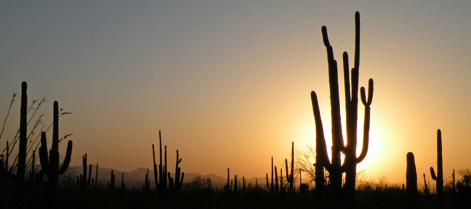 Cheap Flights To Tucson Book Last Minute Flights To Tus